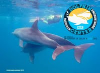 Dolphin Research Center in Ponta do Ouro, Mozambique